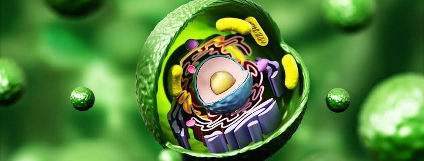 Stickstoff-Monoxid und Mitochondrien