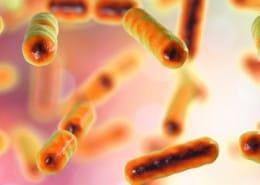 Das gestörte Microbiom und sein Einfluss auf die Gesundheit