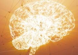 Darm Gehirn Achse