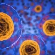 Menschliche Zellen