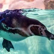 Die Geschichte vom Pinguin