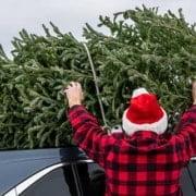 Weihnachtsbaum richtig entsorgen