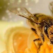 Insektensterben durch EMF