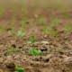 Was ist Carbon-Farming?